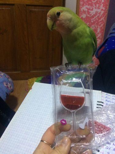 Coque verre de vin pour iPhone photo review